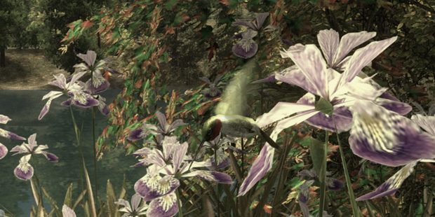 Hummingbird from Walden, A Game