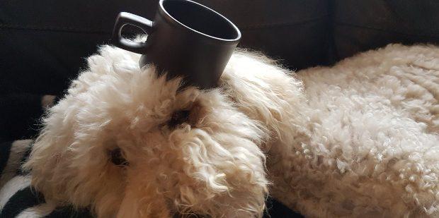 cupdog