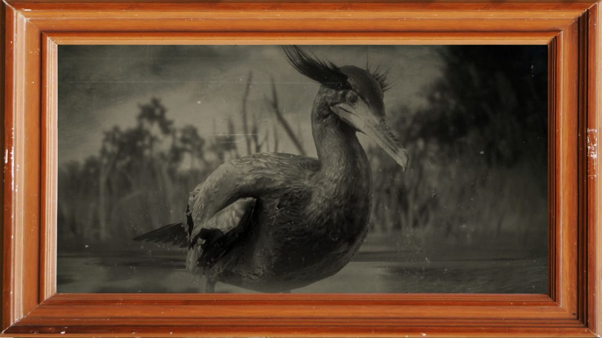 A screenshot of a double-crested Cormorant in Red Dead Redemption 2