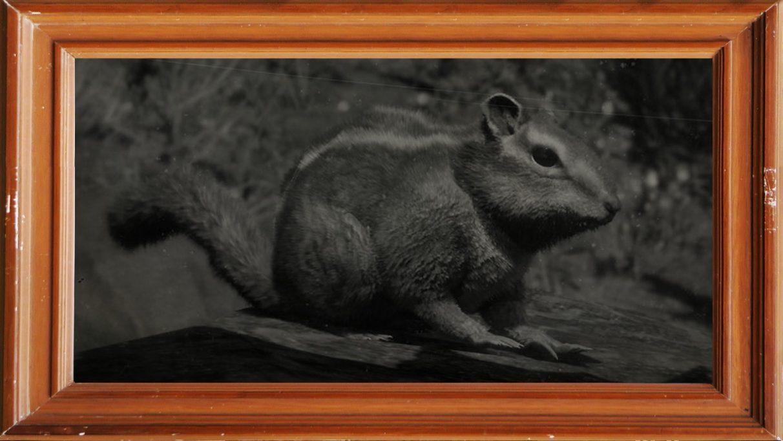 A screenshot of a western chipmunk in Red Dead Redemption 2