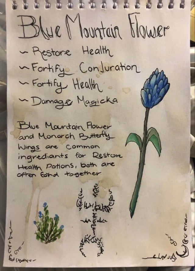 A pen and watercolour drawing of a blue mountain flower, with hand written text listing its alchemical properties and a recipe tip.