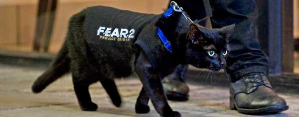 CAT GAMERZ ARMY
