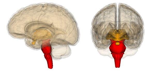 My brainium, unoccupied.