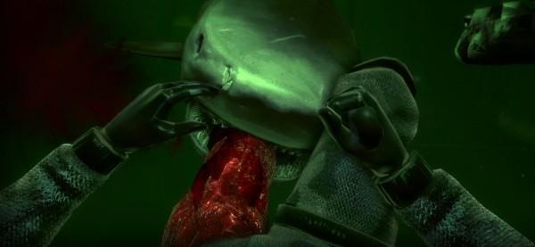 This is a shark attack. This is a shark attack. This is! Shark Attack!