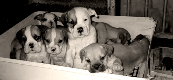 I wasn't sure how to illustrate this piece, so here are some puppies in a box. Aww.