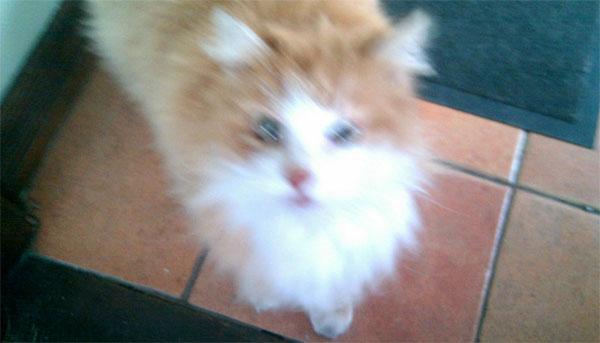 RIP, Terry's cat https://twitter.com/terrycavanagh/status/215579417865490432