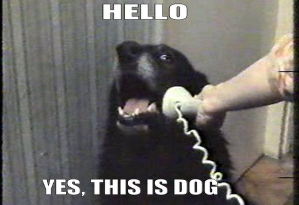 Via http://vivadixies.com/post/10967657837/yes-this-is-dog?b2bb4dc8