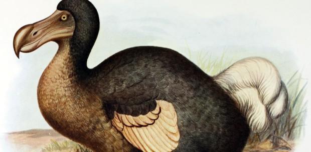 Poor dodo :(