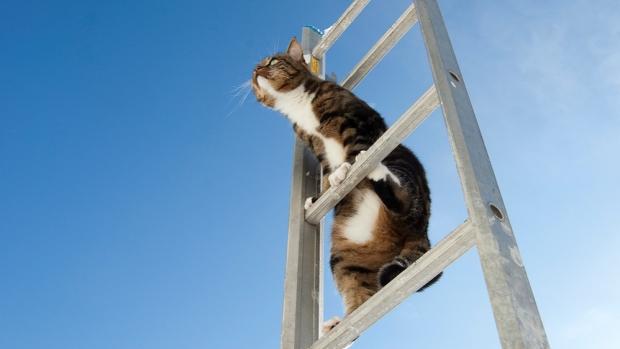 Ladder cat by Kim Ledin