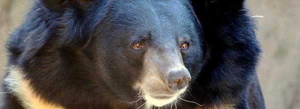 An Avatar of Horace the Endless Bear