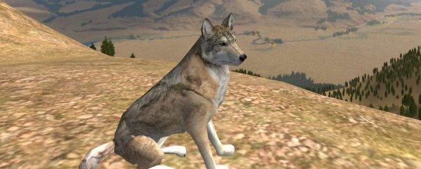 WolfQuest Is Go! | Rock Paper Shotgun - photo#26